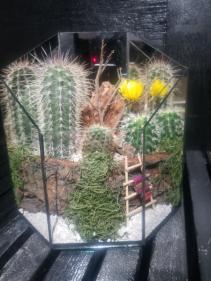 Cactus Garden Cactus Garden