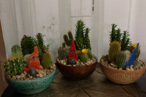 Cactus Garden Plants in Bend, OR | AUTRY'S 4 SEASONS FLORIST
