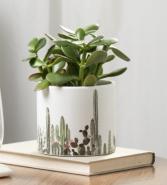 Cactus Motif  Potted plant