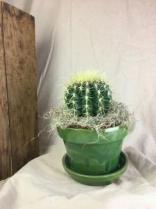 Cactus Plant   TWO OPTIONS Plant