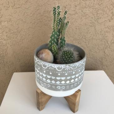 Cactus Planter Cactus Plant