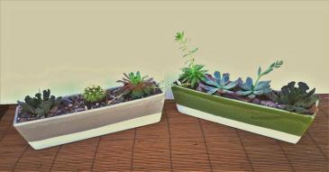 Cactus Succulent Garde Plant garden