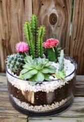 Cactus & Succulent Garden