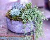 Cael Thomas Live Succulents