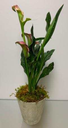 Cala lily  in Geneva, AL | GENEVA FLORIST & GIFT SHOP