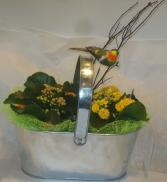 CALENDIVA PLANTER Indoor Blooming Plant