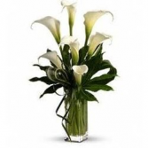 CALLA LILIES SPECTACLE