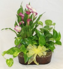 Calla Lily and Philodendron Double Planter