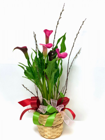 Calla Lily Blooming Plant