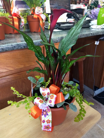 Calla Lily Mix Pot Local Delivery Only In Defiance Oh Fancy Petals