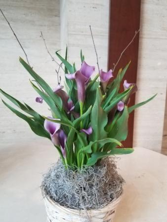 Calla Lily Plant Basket