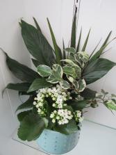 Calming Tropical Ceramic Pot Planter
