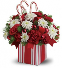 Candy Cane Christmas fresh flowers