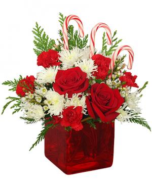CANDY CANE CUBE Holiday Flowers in Clarksville, TN | FLOWERS BY TARA AND JEWELRY WORLD