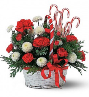 Candy Cane Holiday  in Saint Marys, PA | GOETZ'S FLOWERS