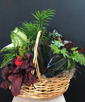 Cardinal songs Planter basket