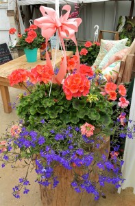 Caribbean Blue  Hanging Basket
