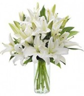 Casa Blanca Delight! Delicious!! PURE AND SIMPLE BEAUTY WITH THESE FRAGRANT LILYS!!