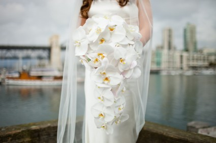 Cascading White Orchid