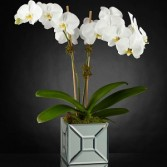 Cascading White orchids in a Beautiful Keep sake .  in Oakville, ON | ANN'S FLOWER BOUTIQUE-Wedding & Event Florist