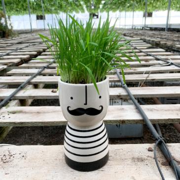 Cat Grass Pierre Pot
