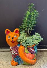 Cat Succulent Arrangement in Talavera Pot