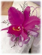 CATTLEYA ORCHID CORSAGE OR WRISTLET