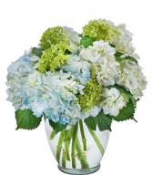 Celebrate hydrangea  Vase