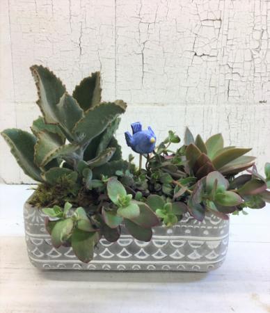 Cement Succulent Garden Plant
