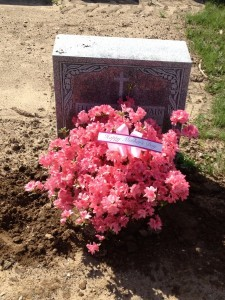 Cemetary azalea planting Seasonal flowers & colors