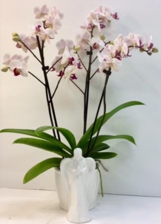 Ceramic Angel Orchid Planter