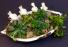 Ceramic Bird Succulent Planter