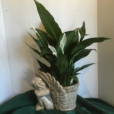Ceramic Cherub Planter Spatiphyllum