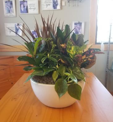 Ceramic Dish Garden (12in)