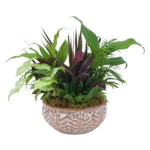 Ceramic Dish Garden Arrangement