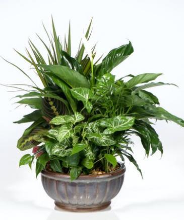 Ceramic Dish Garden Green Plant