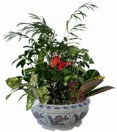 Ceramic Dish Garden   House Plant Planter