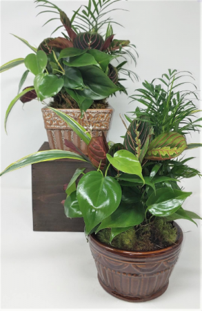 "Ceramic Dish Garden in a 6"" planter"