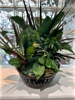 Ceramic Dish Garden Plant in Fort Mill, SC | FORT MILL FLOWERS & GIFTS