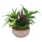 Ceramic Dish Garden Plant Arrangement
