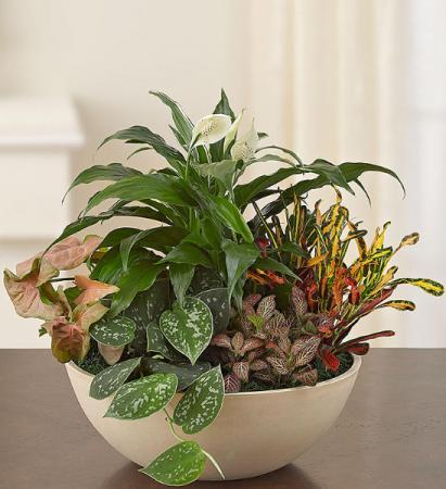 CERAMIC DISH GARDEN Plants