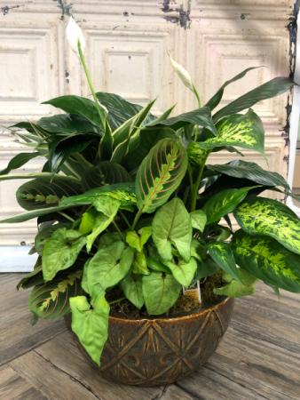 Ceramic Dish Garden Variety of Green Plants