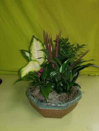 Ceramic Dishgarden Funeral Flowers