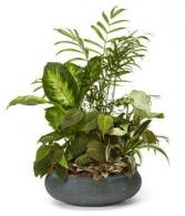 Ceramic Floral Arrangements in a 12 inch dish Ceramic Floral Or  Plant Container