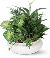 DISH GARDENS WITH FREE  FRESH FLOWER  TRIM MANY CONTAINERS. LARGE SELECTION.