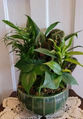 Ceramic mixed garden  Plant