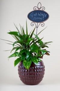 Ceramic Planter Garden  in Aliso Viejo, CA | Lily Fiore Floral Boutique