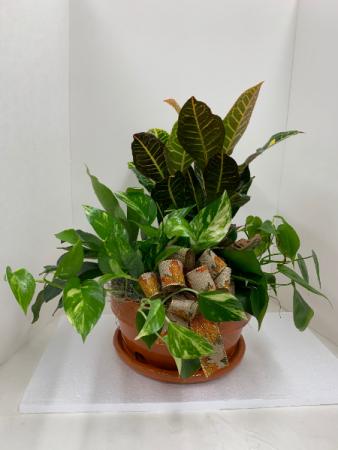 Ceramic Pot Dish-Garden Dish-Garden