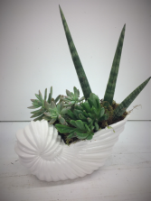 Ceramic Sea Shell Succulent Garden