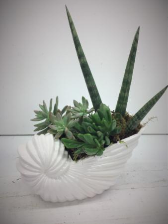 Ceramic Sea Shell Succulent Garden